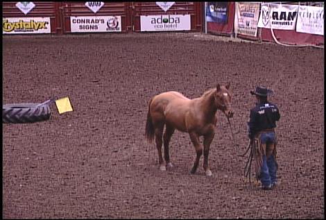 horse whisperer walker 2-1-13
